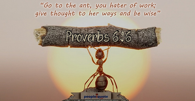 Go to the ant, you hater of work; give thought to her ways and be wise. -Proverbs 6:6
